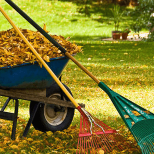 Fall Yard Clean-Up